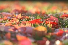 colorful autumn leaves on green grass close up
