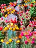 prickly cactus thorns