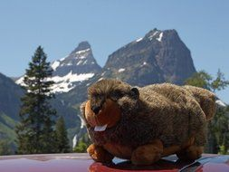 Soft toy of the marmot