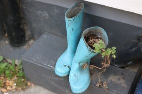 Green plant in blue boots