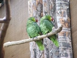 green exotic birds on a branch