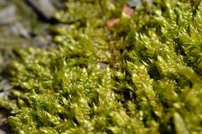 summer green moss close-up