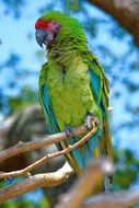bright green exotic parrot