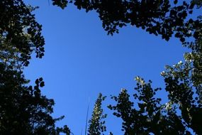 trees foliage and blue sky upward view