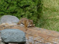 Squirrel on a wooden bench