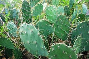 green prickly cactus plants