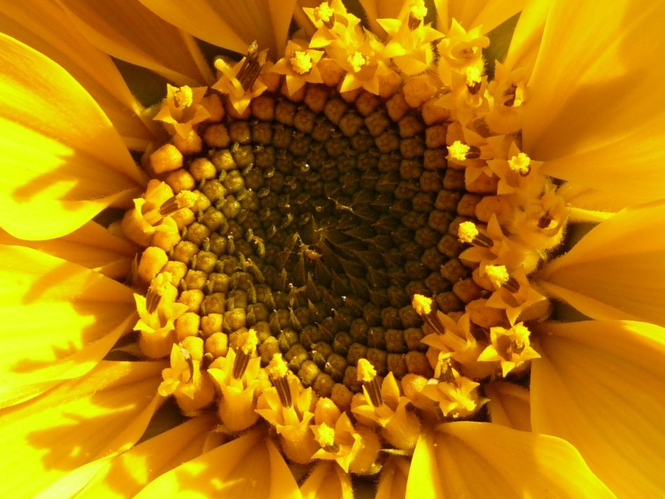 flower basket sunflower closeup