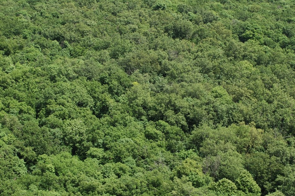 top view of forest with green trees