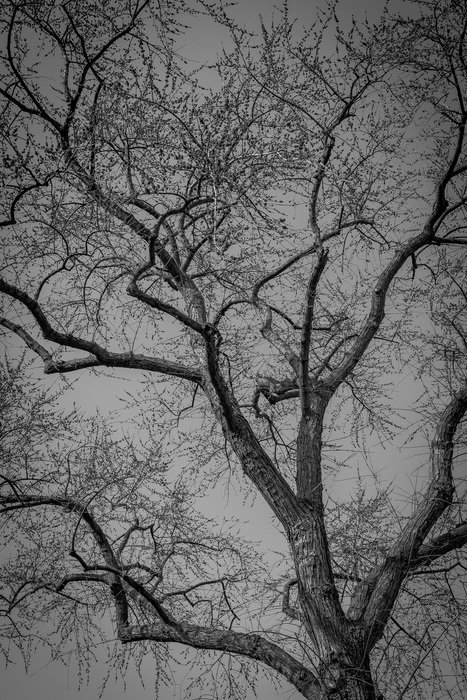 tree with bare branches