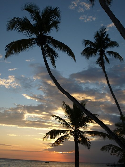 landscape of palm trees at sunset on the canary islands