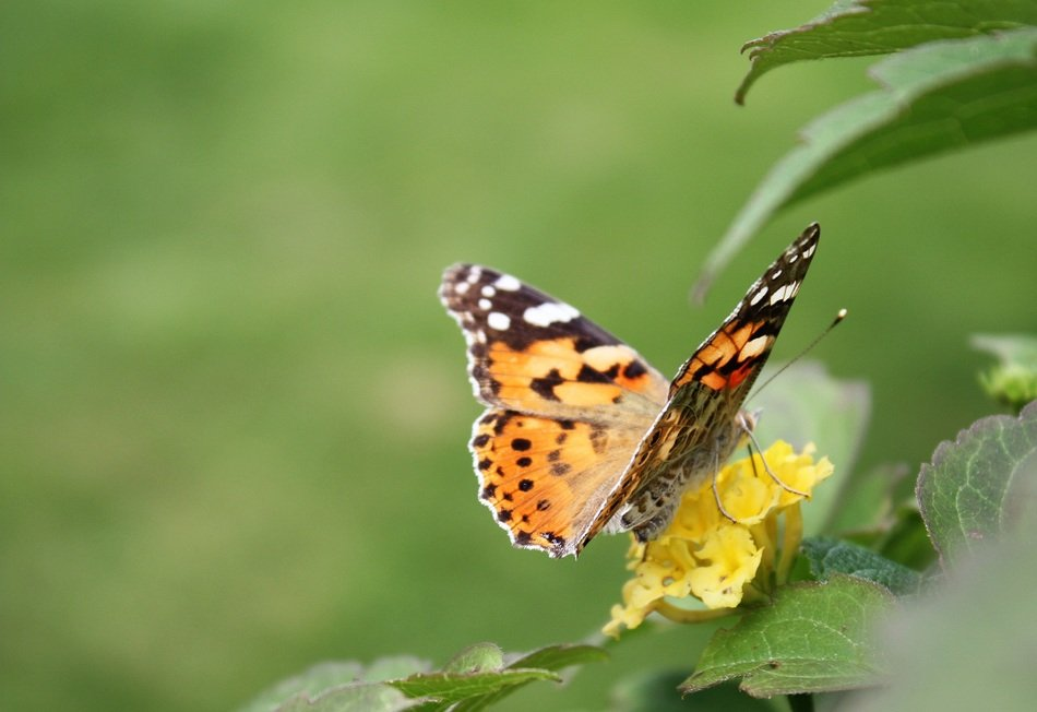 butterfly sits on a plant with a yellow flower