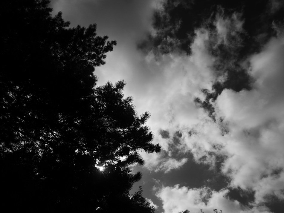 black and white photo of trees and thick clouds