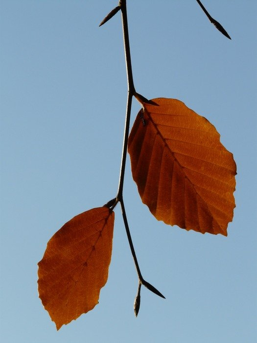 lonely autumn leaves on a branch