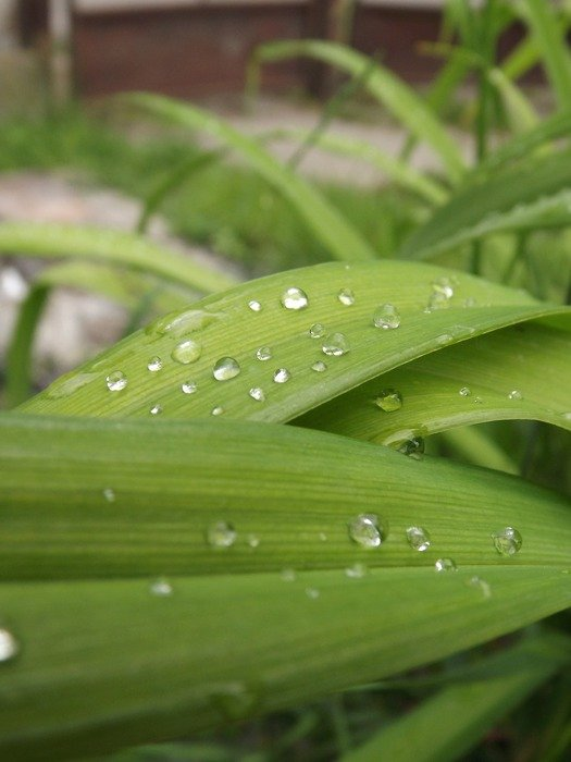 water drops on green leaves