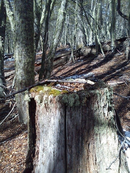 old fallen tree in the forest