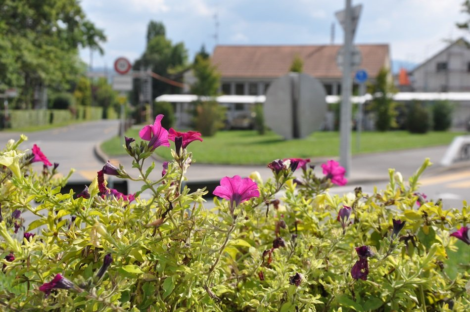 flowering plants in the village