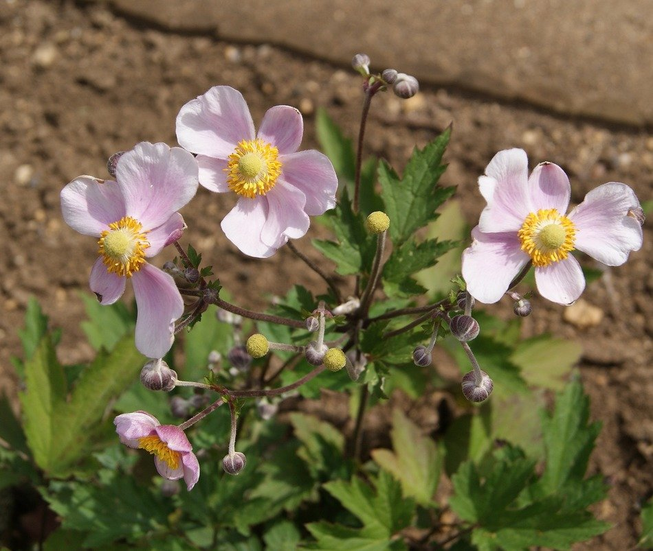 small pink flowers in the spring garden