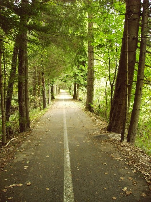 bike path in a green forest