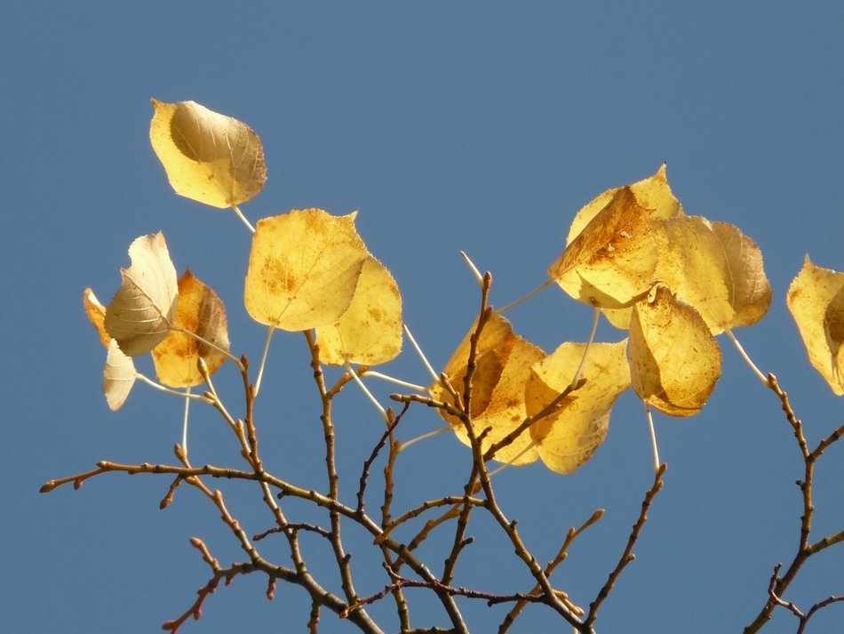 autumn leaves on the branches against the blue sky
