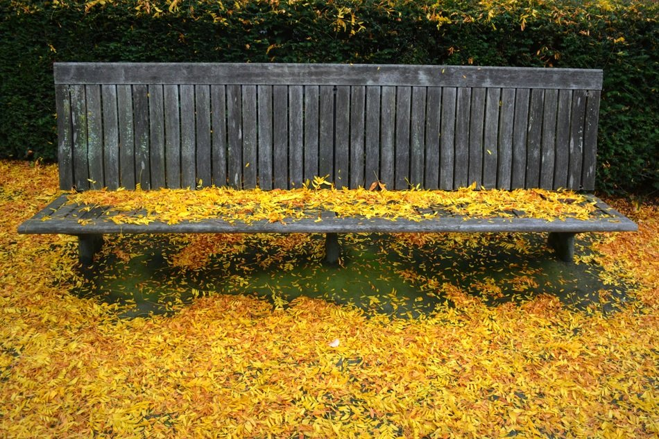 park bench in autumn leaves