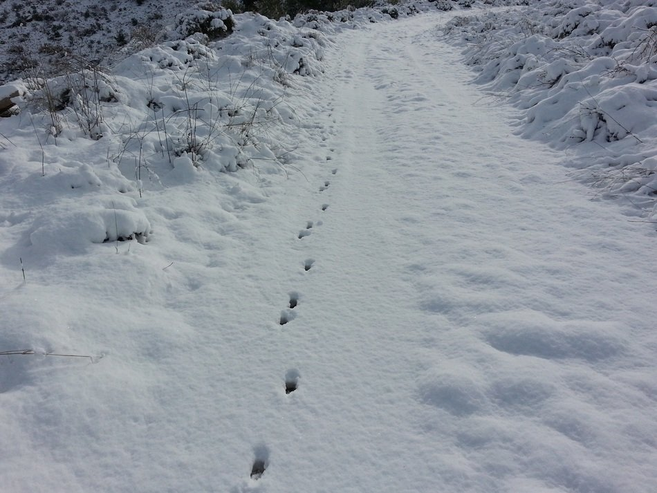 snow path trail