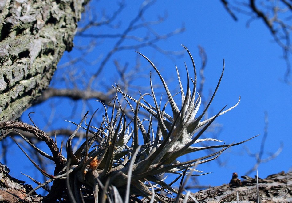 epiphytic plants on the tree close-up
