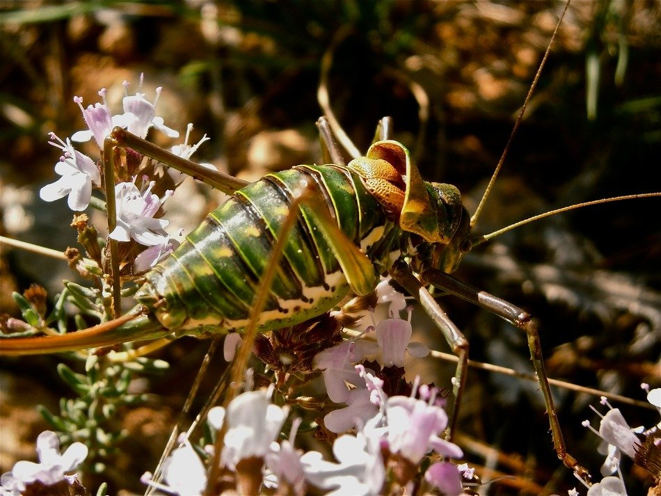 insect grasshopper forest nature summer