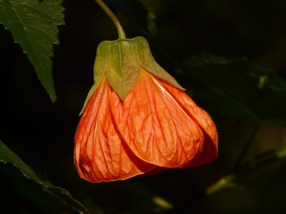 orange flower on a stalk on a dark background