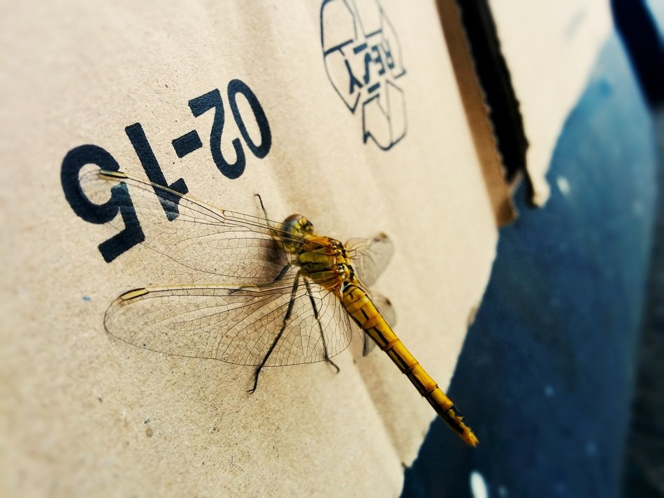 large dragonfly on the wall