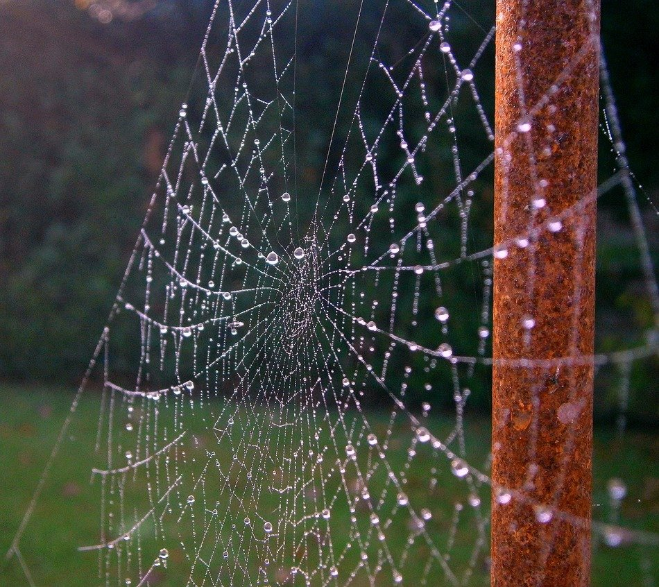 cobweb sparkles in nature