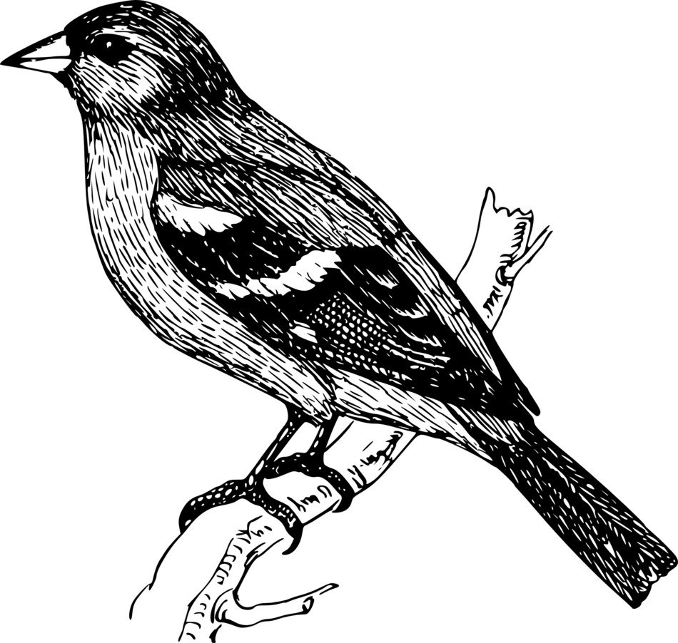 black and white drawing of a bird on a branch