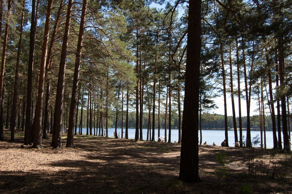 view of the blue lake through the pine forest in Russia