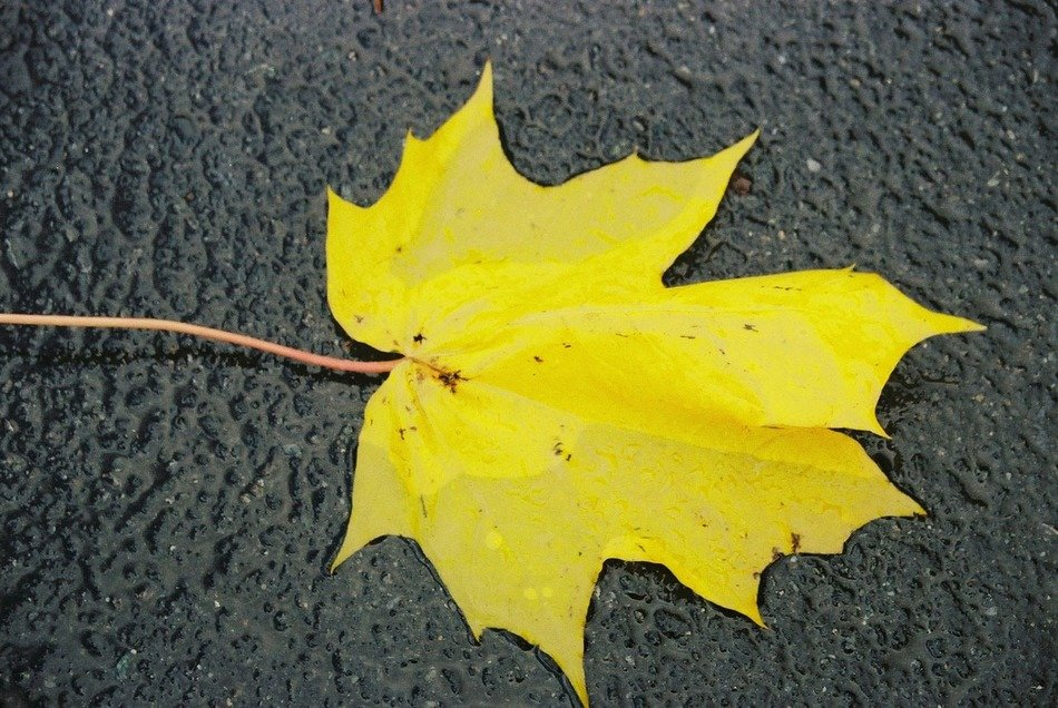 one yellow autumn leaf