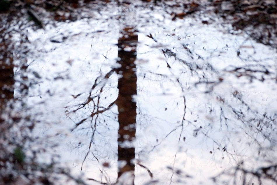 Reflection of tree in a water
