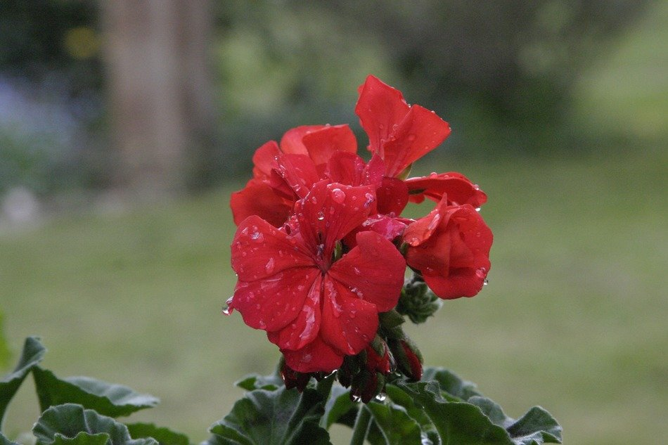 plant with red flowers in the rain