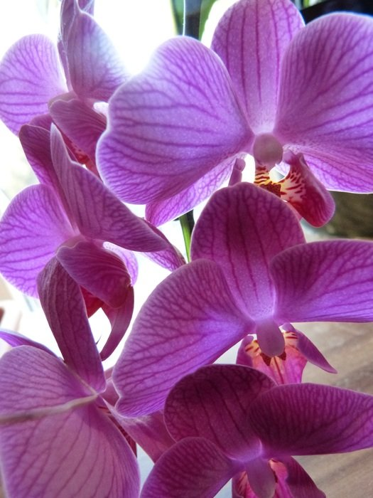 bright purple orchids close-up