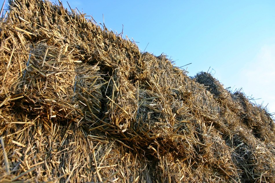 bottom view of the straw bale