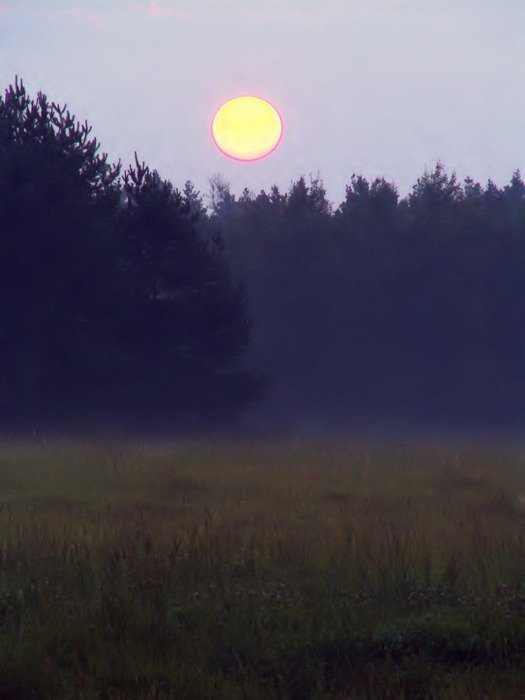 rising round sun over a foggy forest