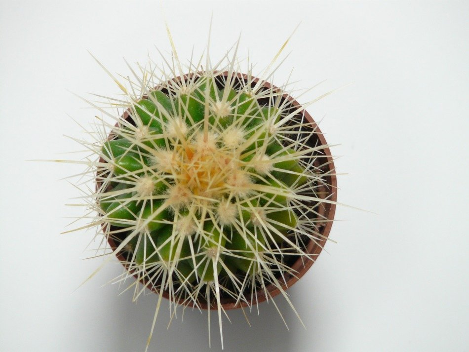 top view of Echinocactus