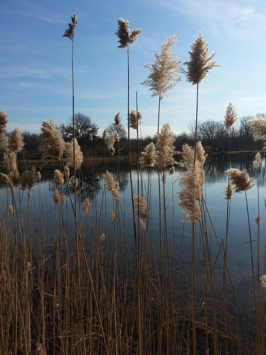 view of the lake through the reeds