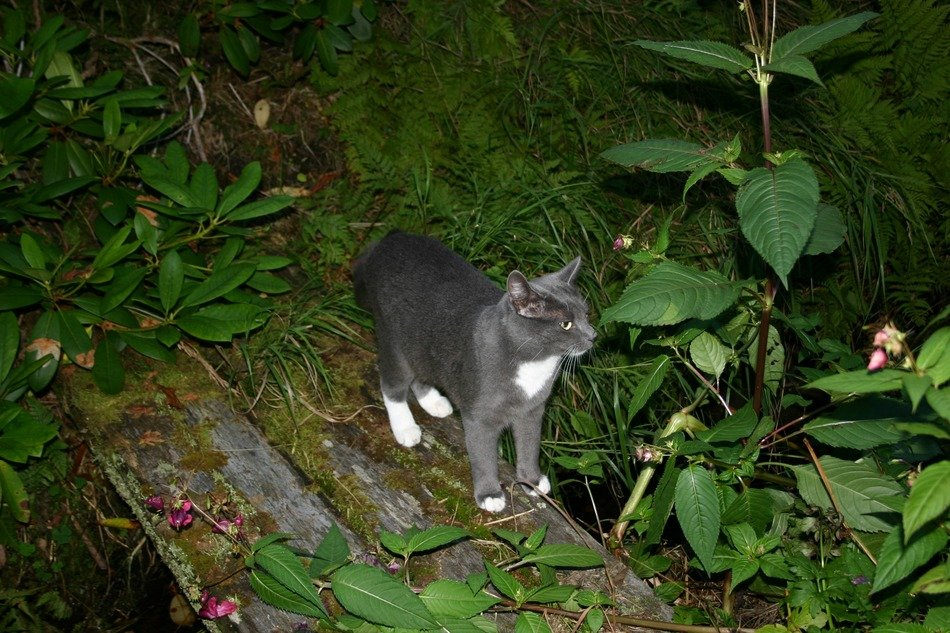 gray cat on the bridge in nature
