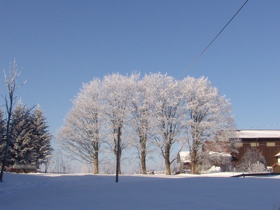 snow covered trees near the house