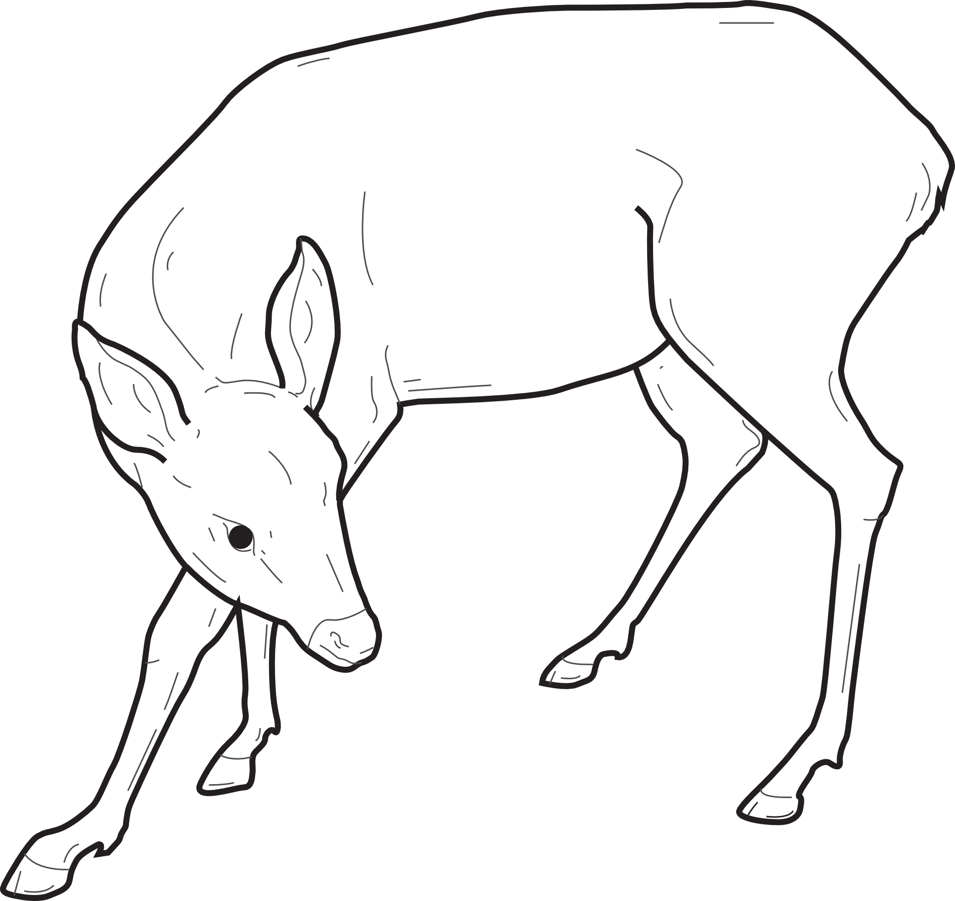 Black And White Sketch Of A Deer Free Image