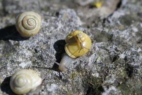 crawling snails