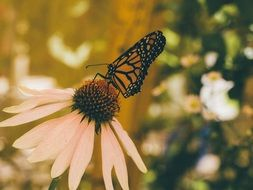 butterfly,insect,flowers,nature,garden