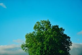 green tree in the summer sky