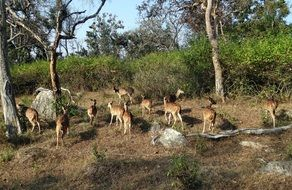 spotted deer in the national park of Karnataka