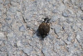 Beetle on a stone walkway