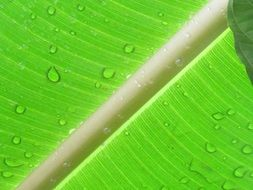 palm leaf with water drops