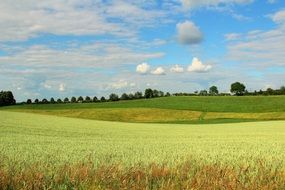 green agricultural field in germany